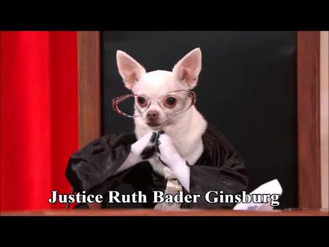 Citizens United v. FEC remix (Last Week Tonight #RealAnimalsFakePaws #PuppyJustice)