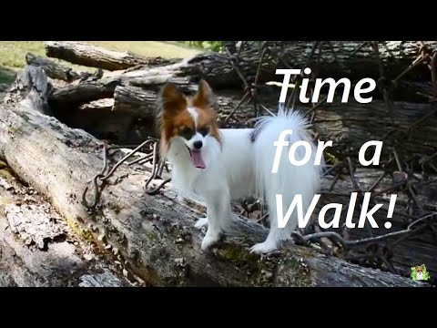 Percy Goes for a Walk on the Farm / Percy the Papillon Dog