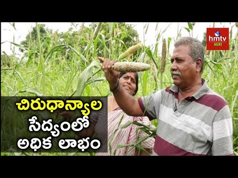 How to earn more in Organic Millet's Cultivation | Narsa Reddy Success Story | hmtv Agri