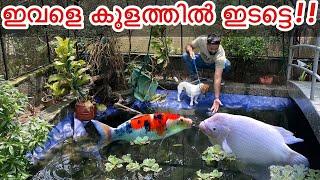 ഇവളെ മീൻ  തിന്നുവോ!!!! | Puppy Reacting to Fish