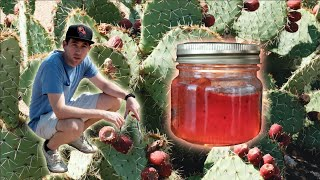 How to make Prickly Pear Jelly