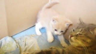 отдам рыжего котёнка в хорошие руки