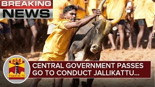 Breaking News : Central Government Passes GO to Conduct Jallikattu during This Pongal - Thanthi TV