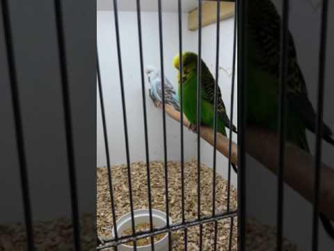 Mijn vogels