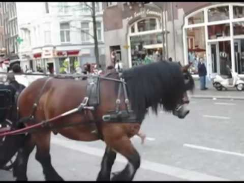 Horse & Carriage Amsterdam 2009