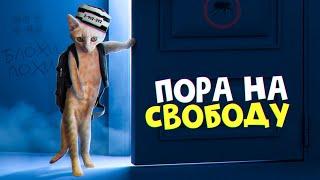 Выпускаем рыжего котенка на свободу SANI vlog