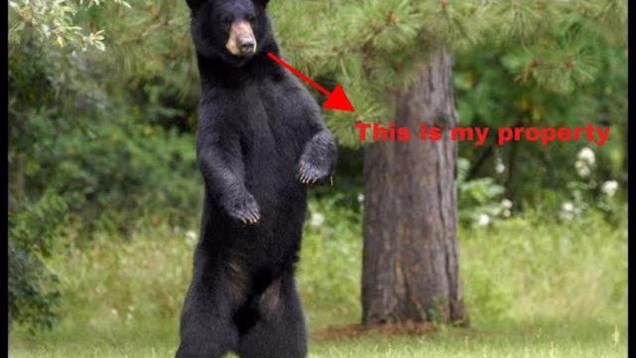 black bear having fun in my backyard u0027have a good day u0027 b c man