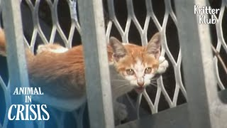 Cat Stuck In A 100ft Bridge Cries Tears Of Relief Upon Seeing A Rescuer | Animal in Crisis EP221