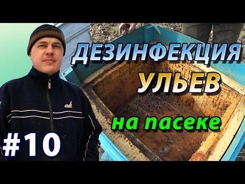 Особенности пчеловодства в Сибири: советы и видео