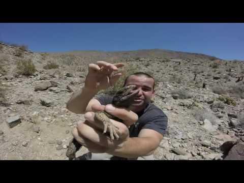 Herping Anza Borrego Desert State Park