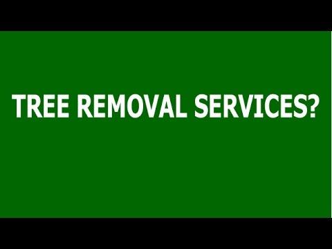 Tree Surgeon Adelaide - Phone AdelaideTreeRemovalcom at 08) 7100-1599