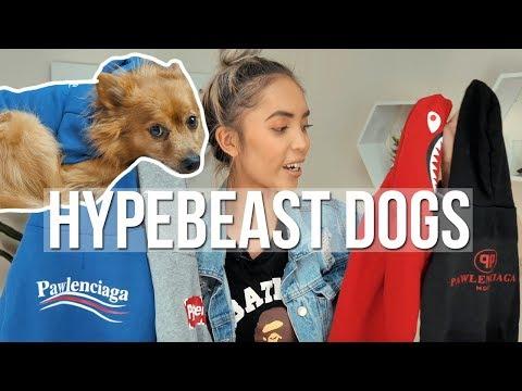 HYPEBEAST DOG CLOTHES!!