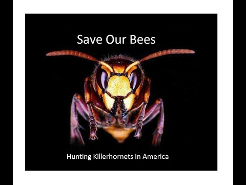 2016 Collapse of Japan's indigenous bees by killer hornets