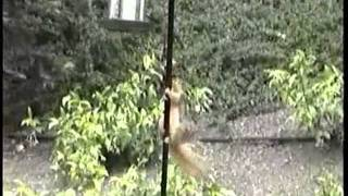 Squirrel On Pole Of Vaseline