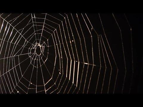 Spider-Man Dr. Todd Blackledge