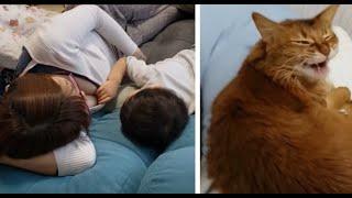自粛中めっちゃダラダラしてる感じの母子や猫たち
