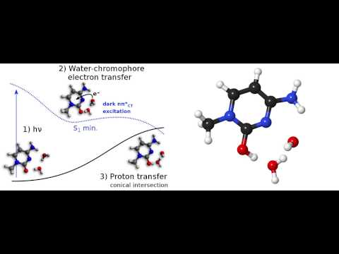 UV-induced Water-chromophore Electron Transfer in Cytosine and Cytidine