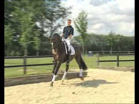 Don Romantic - Elite Stallions