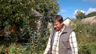 Результаты экспериментов с черенками малины .(Показываю результаты экспериментов с разными сортами малины . Так же принимаю заказы на выращивание саженц..., 2014-09-28T18:51:18.000Z)