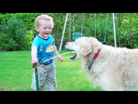 Laughing Babies Playing With Dog And Water | Baby And Dog Video Compilation