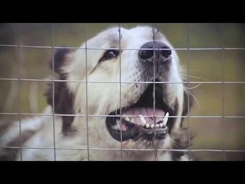 видео: САО Меджах из Таджикистана, проверка на защиту