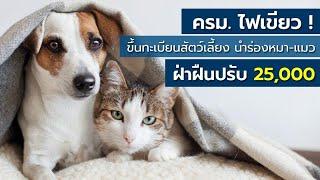 ครม. ไฟเขียวกฎหมายขึ้นทะเบียนสัตว์เลี้ยง นำร่องหมา-แมว ฝ่าฝืนปรับ 25,000