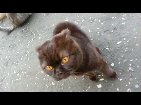 чеченский кот атакует