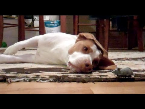Dog Plays With Favorite Toy