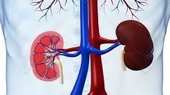 hqdefault - Cancer Kidney Preventing Preventing Ways