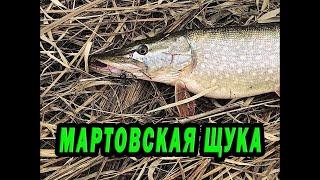 Весенняя рыбалка на спиннинг на малой реке Тверской области