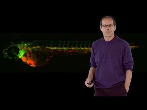 Didier Stainier (MPI) 3: Genetic Compensation