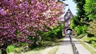 八重桜が咲くトラピスト修道院 「5月20日」