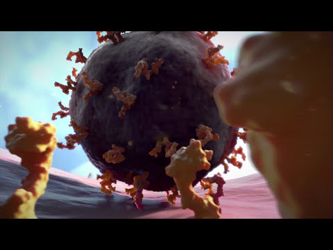 A Virus Attacks A Cell