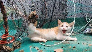 통발에 걸려 다리를 잃을뻔한 새끼 고양이
