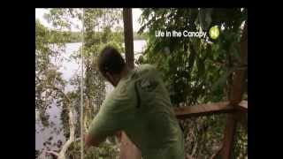 Жизнь на дереве с Viasat Nature