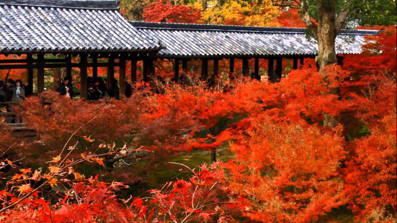 Tempat-tempat utk melihat momiji (maple tree) di Kyoto