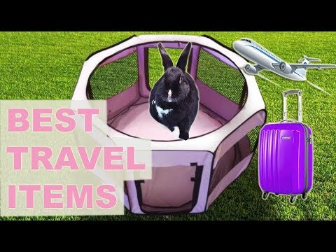 Best Travel Items For Rabbits!