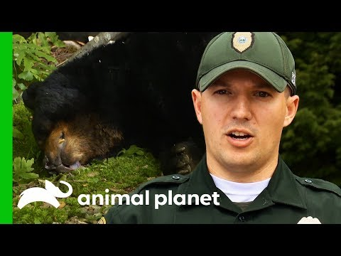 Conservation Officer Investigates Fatal Bear Shooting | North Woods Law