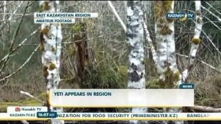 В Восточно Казахстанской области объявился снежный человек - Kazakh TV
