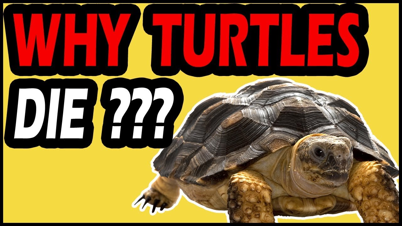 Why Do Turtles Die Suddenly?