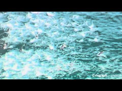 Shark feeding frenzy caught on camera off Australia coast