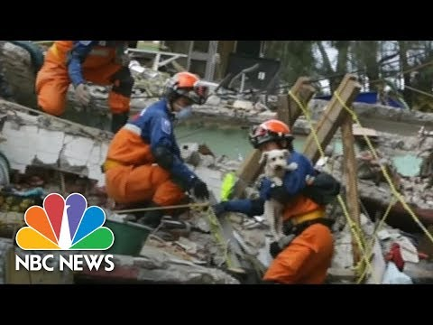 Dog Rescued From Rubble In Mexico, After Six Days   NBC News