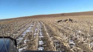 Western KS Coyote Hunt.
