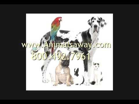 Pet Shipping To Cameroon