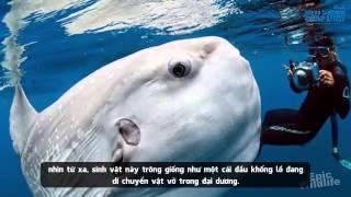 Cận cảnh 'Quái vật' lạ lùng nhất biển Đông mắc lưới ngư dân Việt