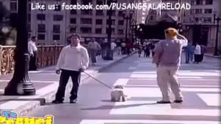 Шок украли собаку