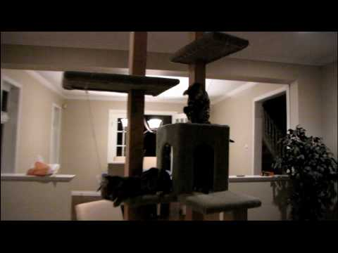 My Weekend Project - Building a Cat Tree - Part 6 Linus Tech Tips