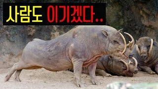Gambar cover 충격! 살아있는 동물을 무기로 사용하다.