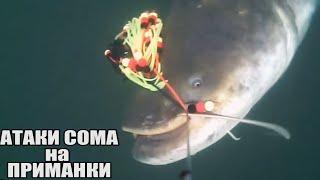 Рыбалка ЗРЕЛИЩНЫЕ ПОКЛЕВКИ Больших СОМОВ на разные приманки Карася Окуня Подводная съёмка