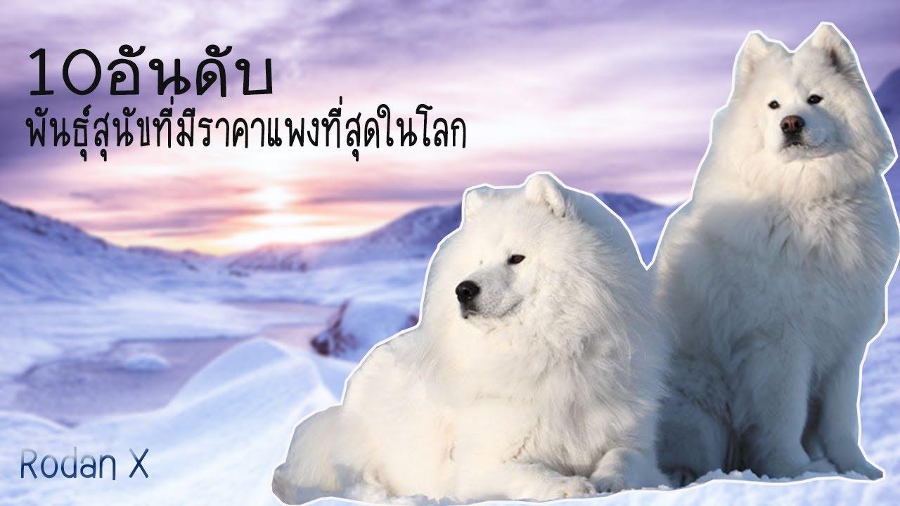 10อันดับสุนัขที่แพงที่สุดในโลก